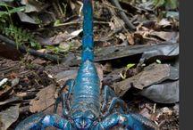 Akrep. Scorpion. 31/12/2015