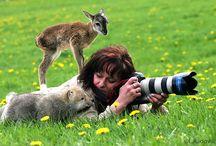 Photografe animalier