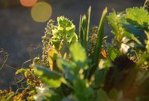 May Flowers / Seasonal Flowers in May in Southern Australia
