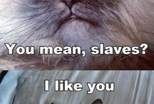 Cats..i just have to make one for cats / by Sierra Horan
