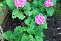 Fiori / Il mio giardino ideale!!!!