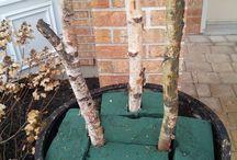 Outdoor christmas pots