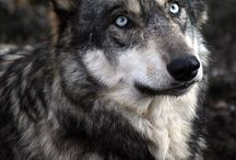 Incredible Animals / We share the world with them. Their eyes are so expressive.   / by more or less