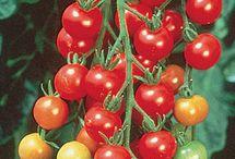 Λαχανικά-Τομάτες