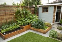 warzywniakowo/Vegetables