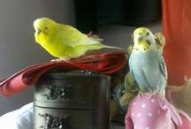 Birds! / by Amy Randall
