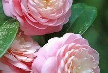 Цветы - Обожаю!