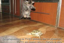 animale kittens and puppies / by Petruta A.