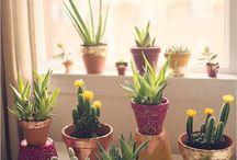 Quero cultivar / jardinagem