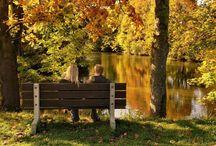 Ősz /Autumn / Ősz csodás szinei