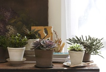Indoor Plants / Green thumb time! / by Patricia Cheadle