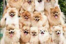 la pyramide de chien