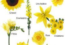 Flores e Folhagens - Nomes e cores