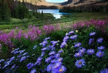Natura- peisaje-picturi