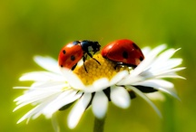 Ladybugs / by Janet Young Lei