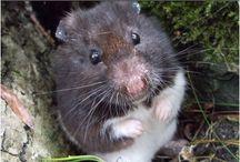 Chomiki/Hamsters / Zobacz zdjęcia ślicznych chomików