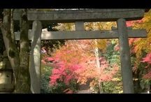fantastic beautiful autumn leaves紅葉・智頭町 JAPAN●http://visitjapan.info / fantastic beautiful autumn leaves紅葉・智頭町 JAPAN●http://visitjapan.info