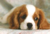 Köpek Bakımı / Köpek Bakımı Hakkında Bilgiler
