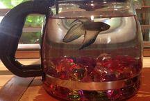Cool fish tanks :)