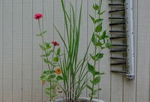Plantas / Decoración