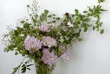 flora / by Brandy Savarese