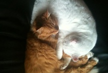 Onze katten - Our cats