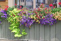 Gardens & Flowers & Veggies...Oh my! / by Amanda Kerner