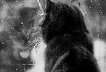 SWAQ CAT SQUAD