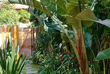Garden - rainforest / tropical