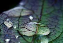 Leaf / Botanic