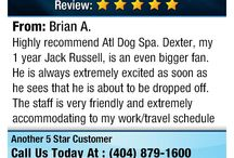 Atlanta Dog Spa Reviews / Reviews from our happy clients