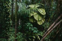 jungle/botanica/ fleur