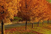 Autumn / All things Autumnal...