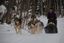 Points Unknown Women's Winter Adventure 2014 / Our 4 day educational adventures immerse you in the lifestyle of an off grid, north woods dog musher with an emphasis on safety, technique and lots and lots of cuddle time with the sled dogs.