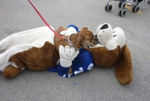 Duke the Dog / by Toronto Marlies