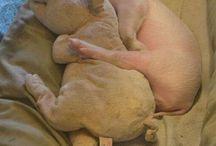 Piggy_cute