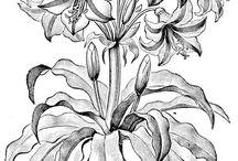 Virágok transzfer