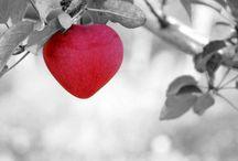 Srdce / foto srdce
