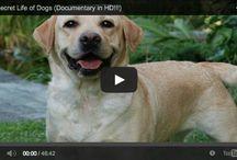 Dog Videos