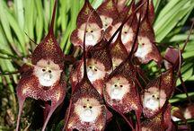 Flora Ecuador