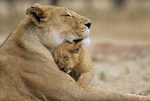 Mommys Love...