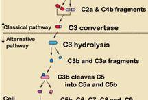 useful biomed diagrams