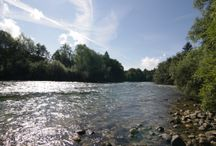 Fishing - The Sava River, Radovljica / The fishing season runs from the 1st March to the 31st October.