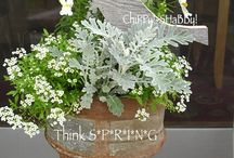 Container Plantings Ideas / bepflanzte Blumentöpfe
