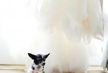 Animals @ Weddings