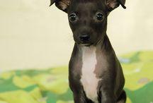 Hund / Vår nye hund
