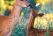 I love animal
