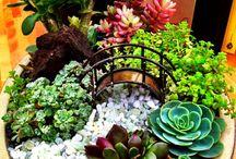 Kreatív Virág Ültetés