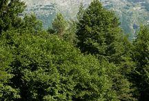 Campings Slovenië