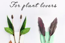 vegan decor ideas